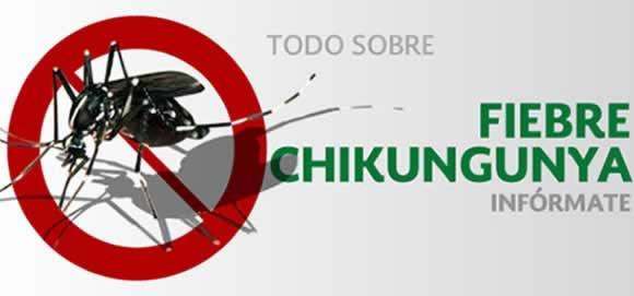 Todo sobre fiebre Chikungunya